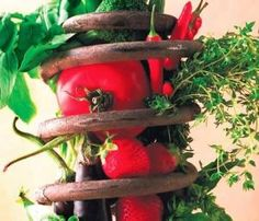 Dag 142 van 2555; wanneer voeding en opvoeding niet langer worden gedaan vanuit gezond verstand   http://dagboekvoorhetleven.wordpress.com/2012/12/23/dag-142-van-2555-wanneer-voeding-en-opvoeding-niet-langer-worden-gedaan-vanuit-gezond-verstand/