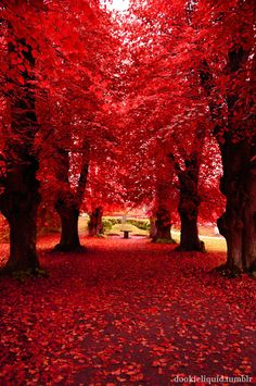 red trees pictures - Google Search
