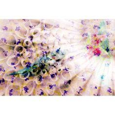 Parvez Taj Weightless Art Print on Premium Canvas, Size: 36 inch x 24 inch, Multicolor