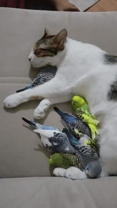 Funny Animal Pictures, Cute Funny Animals, Cute Baby Animals, Animals And Pets, Cute Cats, Funny Cats, Funny Birds, Cute Creatures, Crazy Cats