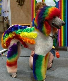 Rainbow Brite~The most colorful girl in the world has got nothing on this vibrant Poodle! www.mom.me/home/16570-extreme-dog-grooming/item/rainbow-brite/