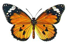 CatnipStudioCollage-: Free Vintage Clip Art - Autumn Butterfly