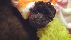 warm dog♡