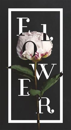 Floral Typography Designs that Combine Flowers & Text Glamour by Hillary BarronGlamour by Hillary Barron