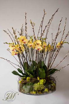 Yellow orchid display.