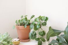 urban jungle book in french and a lot of houseplants blomster pinterest. Black Bedroom Furniture Sets. Home Design Ideas