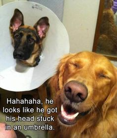 Funny Animal Pictures Of The Day - 15 Images