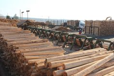 Agri-boffins have their roots in timber - SA Forestry Online : SA Forestry Online Kwazulu Natal, Roots