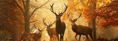 Hunting Wallpaper, Deer Wallpaper, Forest Wallpaper, Wallpaper Pictures, Background Pictures, Flower Wallpaper, Hirsch Wallpaper, Glitter Graphics, Closer To Nature