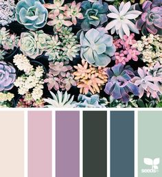 succulent hues (design seeds)