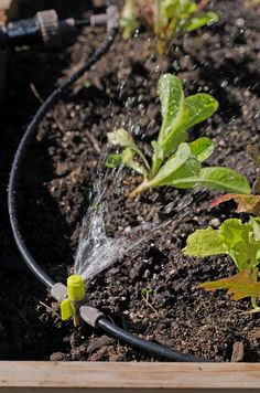 Micro Snip-n-Spray Garden Sprinkler System | Gardeners.com