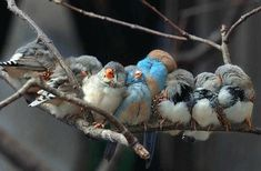 Beautiful Bird Huddles