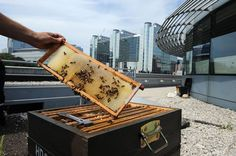 In May the EESC became the first European institution in Brussels to join the urban beekeeping movement by placing two beehives on the roof of our main building. Bee populations are e. Secret Gardens, Rooftop Terrace, Brussels, Spaces, Mugs, Green, Europe, Roof Deck, Tumblers