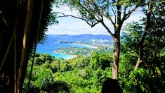 Phuket - What you need to know before you go Phuket Travel Guide, Go Guide, Phuket Hotels, Destin Beach, Travel Information, Palm Trees, Thailand, Tours, Vacation