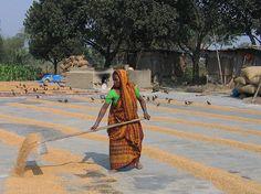 Old women walking bangladesh — pic 12