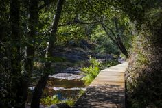 Sabe que o maior trilho pedestre do mundo passa pelo centro de Portugal? – YUPblog Sidewalk, Grande, Mountain Range, Pedestrian, Amazing Places To Visit, Walks, Railings, Raisin, Forests
