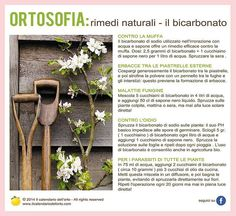 Il Calendario dell'Orto Farmhouse Garden, Exterior, Green Garden, Vegetable Garden, Good To Know, Flower Arrangements, Flowers, Gardens, Terrazzo