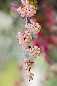 Coral Beads  by Jacky Parker Floral Art