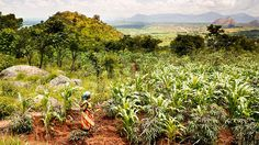 Agribusiness can help to unlock the true potential of Africa