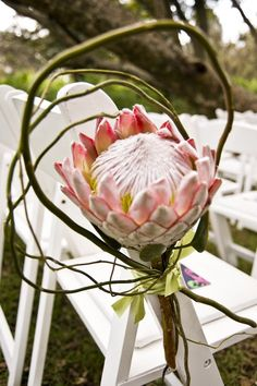 King Proteas and Willow are gorgeous as chair decoration for an outdoor wedding
