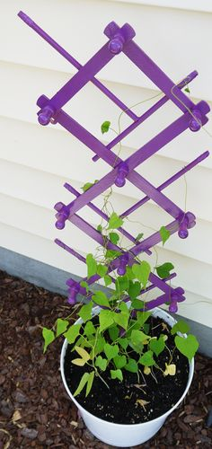 Accordion Peg Rack Repurposed As a Trellis
