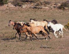 Black Hills Wild Horse Sanctuary, Hot Springs South Dakota