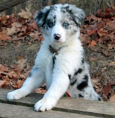 Seven the Border Collie  Pictures 944248