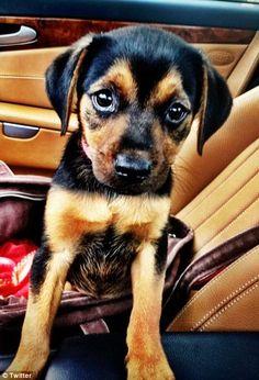 Mileys puppy