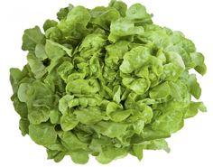 6 salaattia – näin kasvatat ja hoidat:: LEHTISALAATTI Lehtisalaatit eivät tee kerää vaan soman ruusukkeen. Lajikkeita on runsaasti heleän vaaleanvihreistä tummanpunaisiin. Myös tammenlehtisalaatit kuuluvat lehtisalaatteihin. Kylvämällä eri lajikkeita saa mukavaa vaihtelua pöytään.