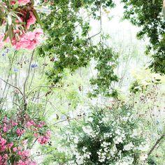 """giardino di oleandri"""