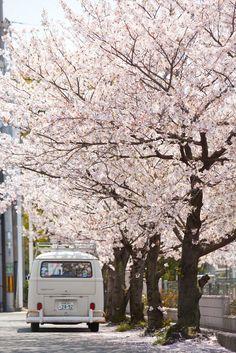 I CANNOT get over these Sakura Trees right now!!!! They are sooooooo beautiful!!!