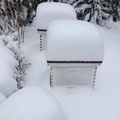 Beekeeping in Winter: Hive maintenance after a snow storm.