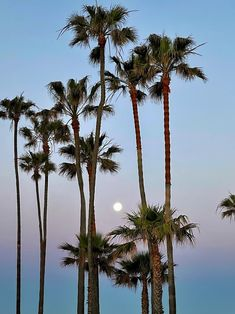 The setting full moon is framed by palm trees next to the Newport Beach Pier on a clear, spring morning. Newport Beach Pier, Clear Spring, Moon Setting, Full Moon, Palm Trees, California, Celestial, Frame, Outdoor