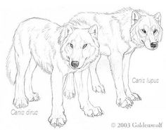 Canis dirus - Canis lupus by Goldenwolf