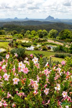 Maleny Botanic Gardens and the Glass House Mountains - Sunshine Coast Hinterland, Australia. Visit our blog for tips on what to see & do.