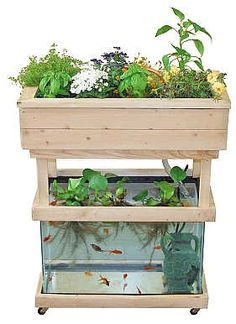 Instructions for using a 3-20 gallon aquarium for setting up a small aquaponics system. (This could be a fun way to experiment growing greens hydroponically.)