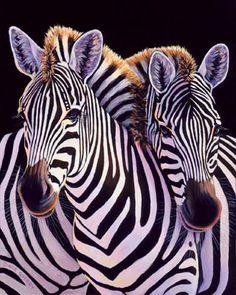 1252429922_Cebras.jpg (320×400)