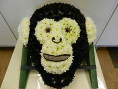 Meet the Monkey