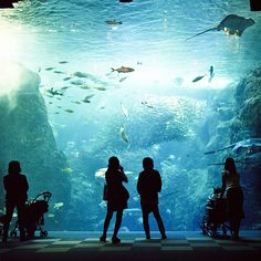 aquarium- I may be working here one day if I go through with Marine Biology