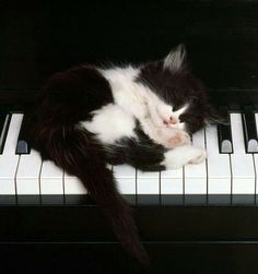 The occasional nap while practicing scales increases creativity