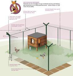 Hoe bescherm je je kippen tegen vossen?