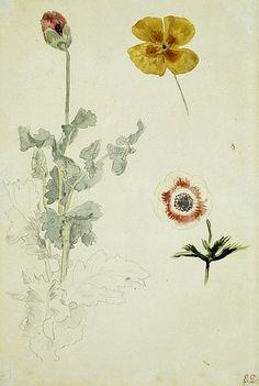 *Eugène Delacroix Study of Flowers 1845-50