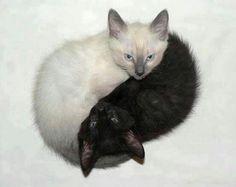 zwart wit contrast ying yang teken van poesjes