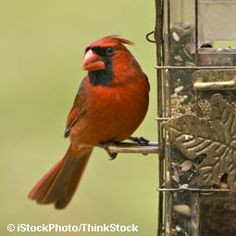 Check feeding stations before cold weather arrives to make sure your backyard birds know where to go in a pinch.