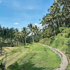 Rice paddies next to the Gunung Kawi Temple. These paddies and jungle vipes are amazing here. I know the picture is not that interesting, but it was so fun to hike and explore the area around the temple and connect with the friendly locals there. When you are there, go for an adventure and find the waterfall. . . . . #indonesia #bali #ricepaddies #jungle #gunungkawi #backpacking #explore #travel #travelling #visiting #adventure #trip #vacation #holiday #travelblog #travelblogger #sony…