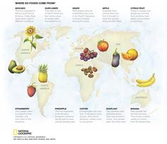 Crop Origins (watercolor) http://theplate.nationalgeographic.com/2015/09/08/why-theres-no-such-thing-as-local-food/ #crops #world #map #sunflower #strawberry #avocado #grapes #banana #orange #apple #pinapple #watercolor #food #art #illustration #nationalgeographic #natgeo #scienceillustration #science
