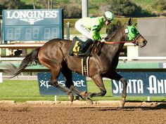 Melatonin(2011)(Gelding)Kodiak Kowboy- Yanquee Reign By Yankee Victor. 3x5 To Vice Regent, 5(C)x5(C) To Mr Prospector. 13 Starts 5 Wins 3 Seconds 3 Thirds. $1,218,552.  Won Santa Anita H(G1), Gold Cup @ SA(G1), 2nd Oaklawn H(G2), 2nd Eddie D S(G3T).