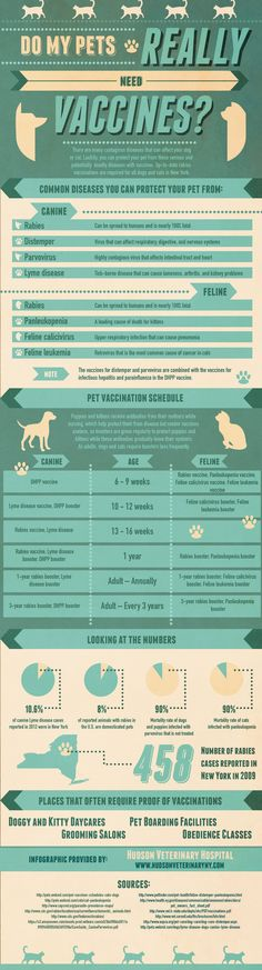 Do My Pets Really Need Vaccinations? Infographic