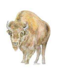 Bison - watercolor giclée reproduction. Perfect for the western themed room! Portrait/vertical orientation. Printed on fine art paper using archival pigment inks. This quality printing allows over 100