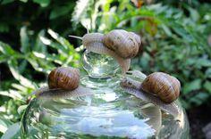cz: Stop the slugs The Slug, Garden, Flowers, Garten, Florals, Gardens, Flower, Blossoms, Tuin